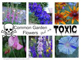 is your flower garden dangerous flower patch farmhouse