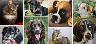 Pet Pet Portraits Dog Portraits Cat Portraits Animal Portraits