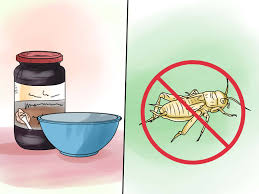 easy ways to get rid of common house geckos wikihow