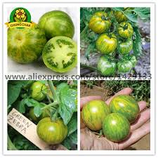perennial fruit vegetable seed green zebra tomato seeds 200pcs