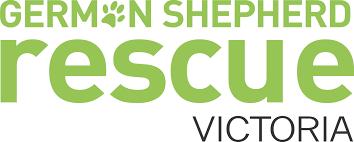 belgian shepherd gumtree surrender u2014 german shepherd rescue victoria
