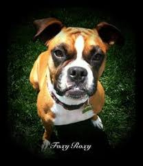 boxer dog keeps coughing boxer dog wire pendant google search wire jewelry pinterest