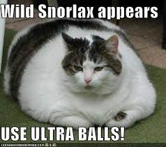 Snorlax Meme - image 23888 a wild snorlax appears know your meme