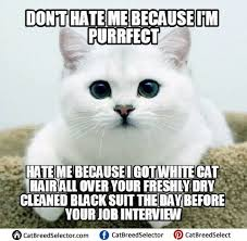 Cute Kitty Memes - amazing 25 cute kitty memes wallpaper site wallpaper site