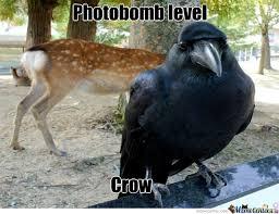 Crow Meme - fabulous crow by marquis de sade meme center