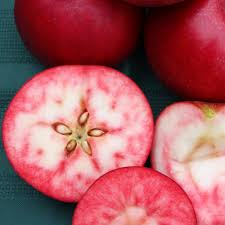 apple rosette pink fleshed apple trees for sale