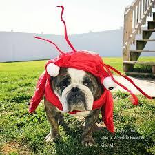 english bulldog halloween costumes halloween dog costumes u2013 baggybulldogs