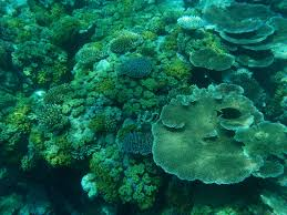 coral reefs ecosystems full of life national geographic society