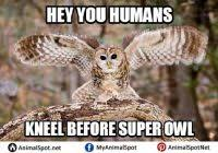 Happy Birthday Owl Meme - list of synonyms and antonyms of the word owls wearing birthday hats