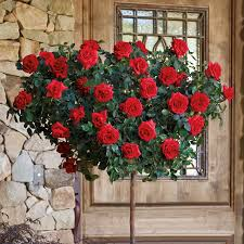 Rose Home Decor by Patio Tree Roses Inspirational Home Decorating Wonderful And Patio