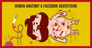 Cartoon Human Anatomy 5 Ways Human Anatomy Can Make Your Facebook Ads Totally Captivating