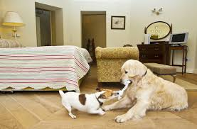 house dogs pet friendly accomodation donegal pet friendly hotels rathmullan