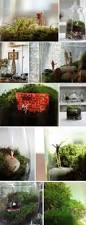 best 25 twig terrariums ideas on pinterest mini terrarium diy