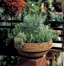 Plant Combination Ideas For Container Gardens Container Gardening Ideas Themed Herb Pots
