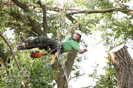 arbor aesthetics tree service quality tree trimming removal