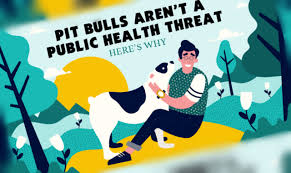 rent a pit pit bulls aren t a health threat here s why infographic