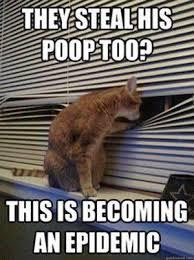 Cats Memes - cat memes home facebook
