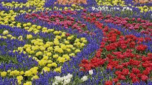 pictures of beautiful flowers in a garden 1920x1080 desktop