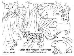 welcome to dover publications rain forest animals fun kit kids