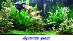 ewaterplant resource of aquatic plant and ornamental plants