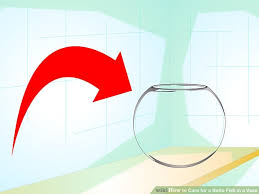 Betta In Vase How To Care For A Betta Fish In A Vase With Pictures Wikihow