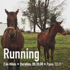 thanksgiving the running rebel