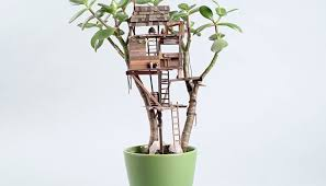100 tiny indoor plants stunning potted indoor plant