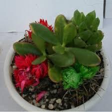 cactus flower shop in nigeria buy flowers in lagos flowers