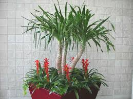 identifying house plants interior design