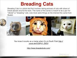 Cat In Bread Meme - happy caturday cat games tails from the street