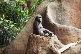 Zoo Resume Careers With Animals Zoo Curator