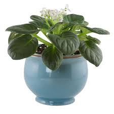 Self Watering Planters Central Garden And Pet 6 25 In Aqua Ceramic Crackle Self Watering