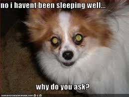 Pun Dog Meme - i has a hotdog coffee funny dog pictures dog memes puppy