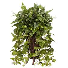 interior exciting interior potted plant with pothos plant for