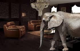 elephant living room the elephant in the alternative investment living room jagen llc