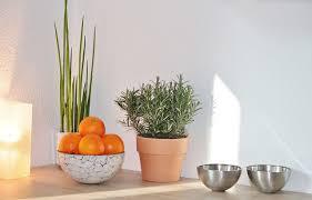 plante cuisine decoration une plante dans ma cuisine mettez votre cuisine au vert