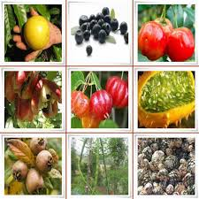 fruit names that start with a fruit names a z with pictures