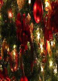 decorated live christmas trees christmas lights decoration