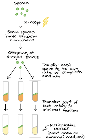 alleles and genes video khan academy