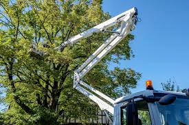 sample contract for tree removal when hiring a service
