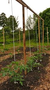 weekend gardening at bernie u0027s