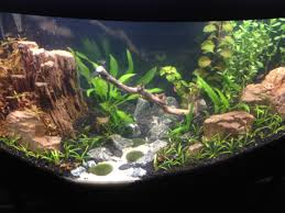How To Aquascape A Planted Tank Aquarium Pictures Aquatic Finesse Llc