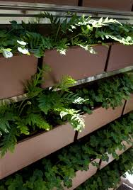 wholesale native plants native sons inc now offers livewall the new planted wall