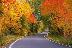 fall leaves why do leaves change color in the fall the