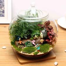 diy moss micro landscape eco glass bottle succulent plants flower