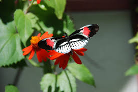 butterflies birds and bugs oh my sanderstories