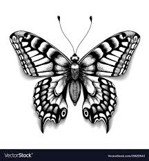 butterfly with shadow vector image