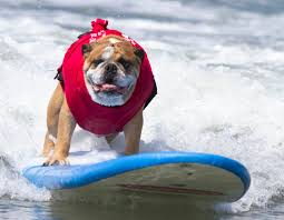 8 top dog events in los angeles rover com