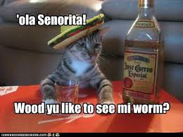 Funny Tequila Memes - animal capshunz tequila funny animal pictures with captions