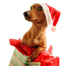 pet christmas are dogs christmas presents mibba